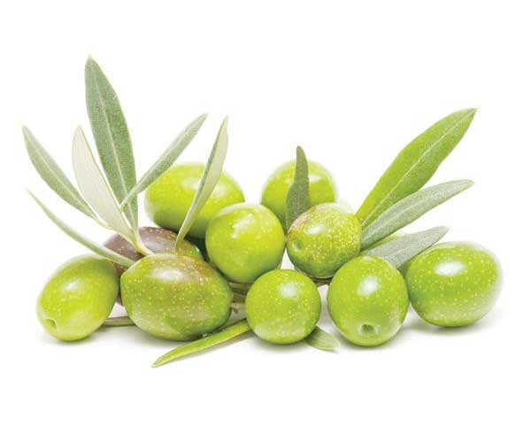 olive oil health food recipes