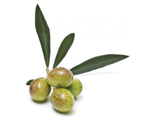 Nocellara Extra Virgin Olive Oil