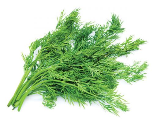 Dill Wild Fernleaf Olive Oil