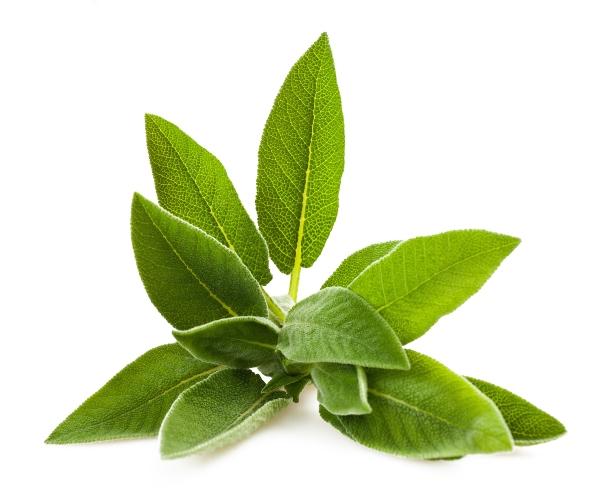 Fused Sage Olive Oil